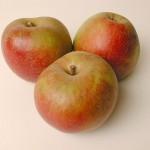 T&B Vergers pommes boskoop