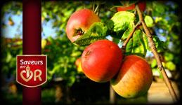 TetB-Vergers, vergers pommes